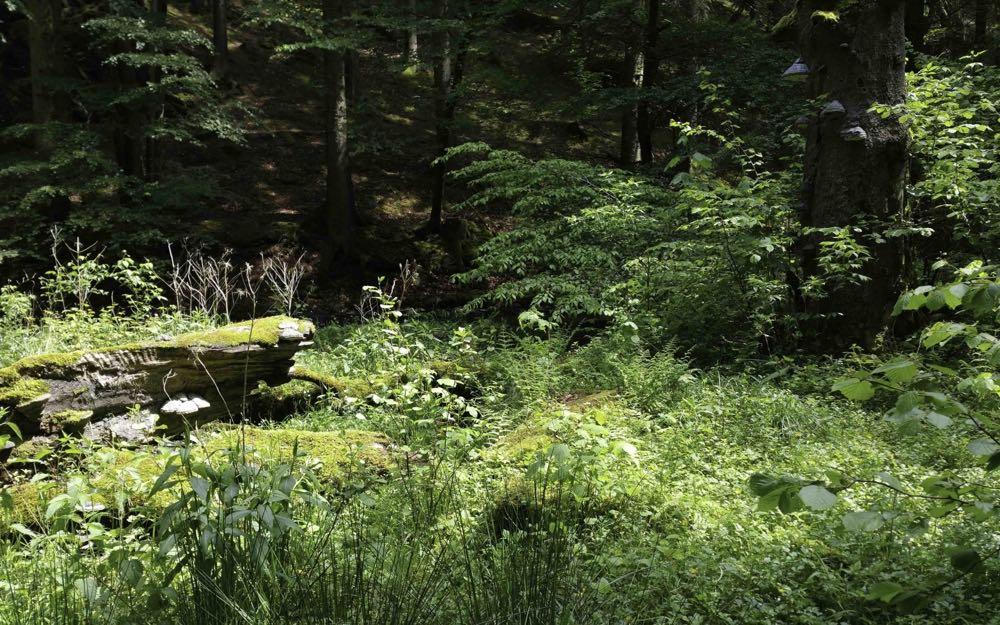 © J Esser, Nationalpark Eifel