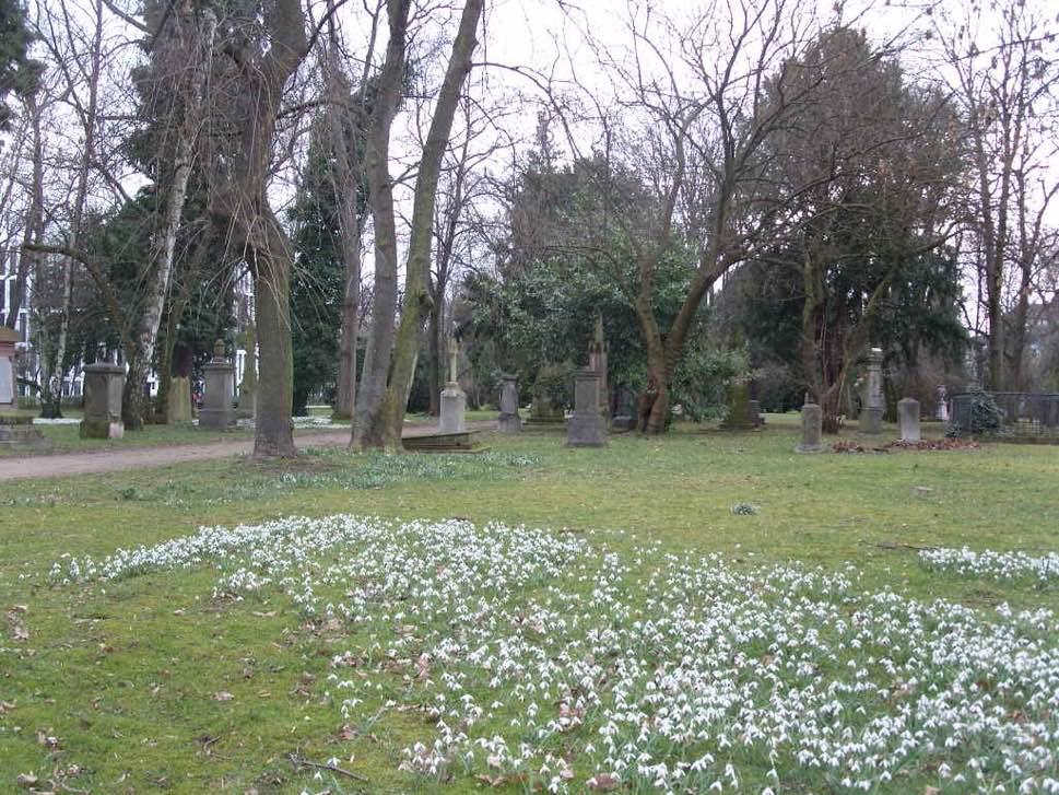Gravestones in cemetery and flowers
