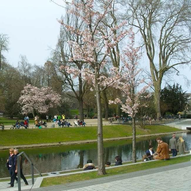 Park with Japanese cherry blossoms